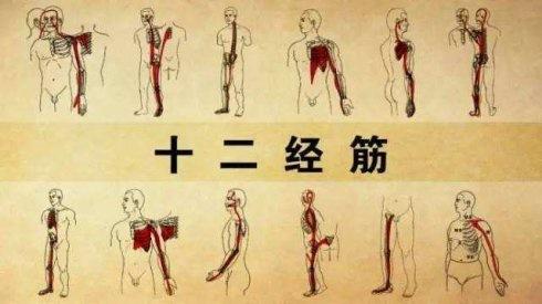 中国自主肌筋膜链正式发布,中国自主筋膜技术正走向世界!